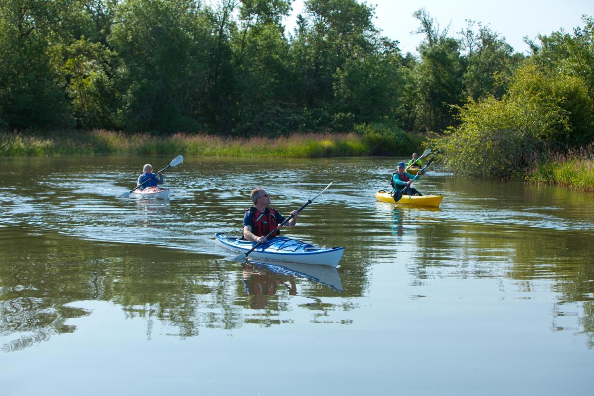 Fern Ridge Kayaking Courtesy of Eugene, Cascades & Coast