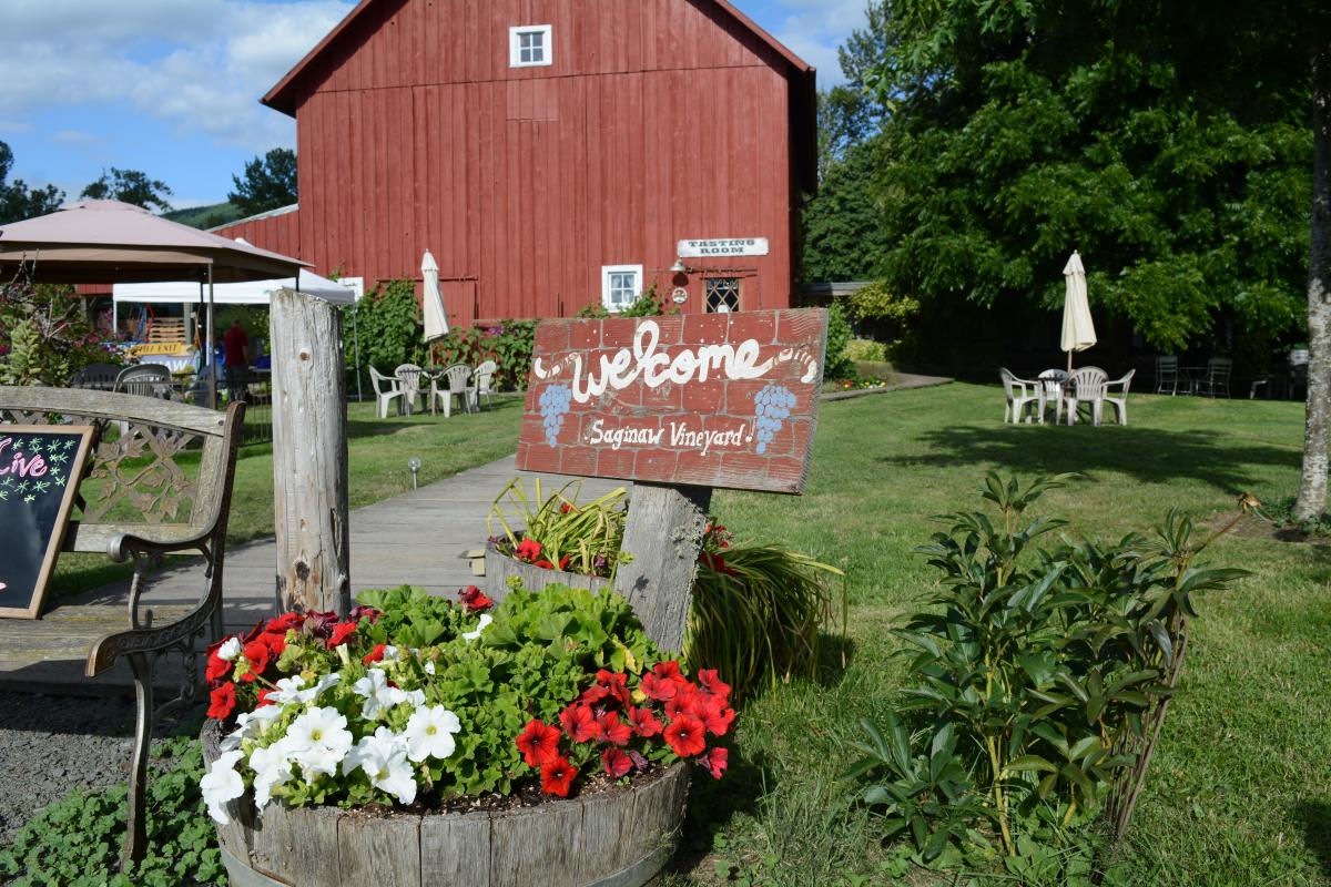 Saginaw Vineyard - Cottage Grove by Colin Morton