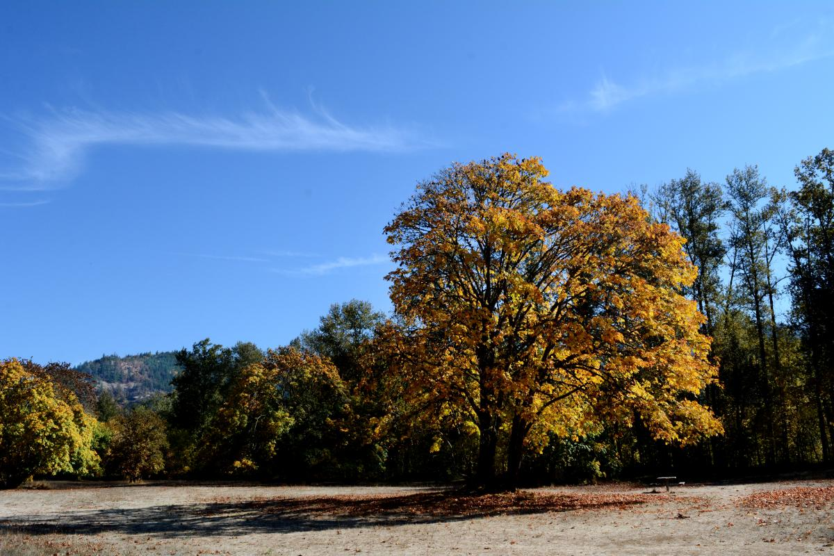 Lynx Hollow Park in the fall by Colin Morton