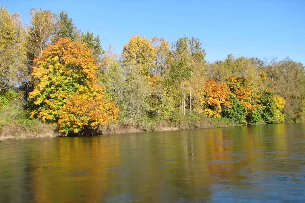 Fall foliage on Willamette River by Cari Garrigus