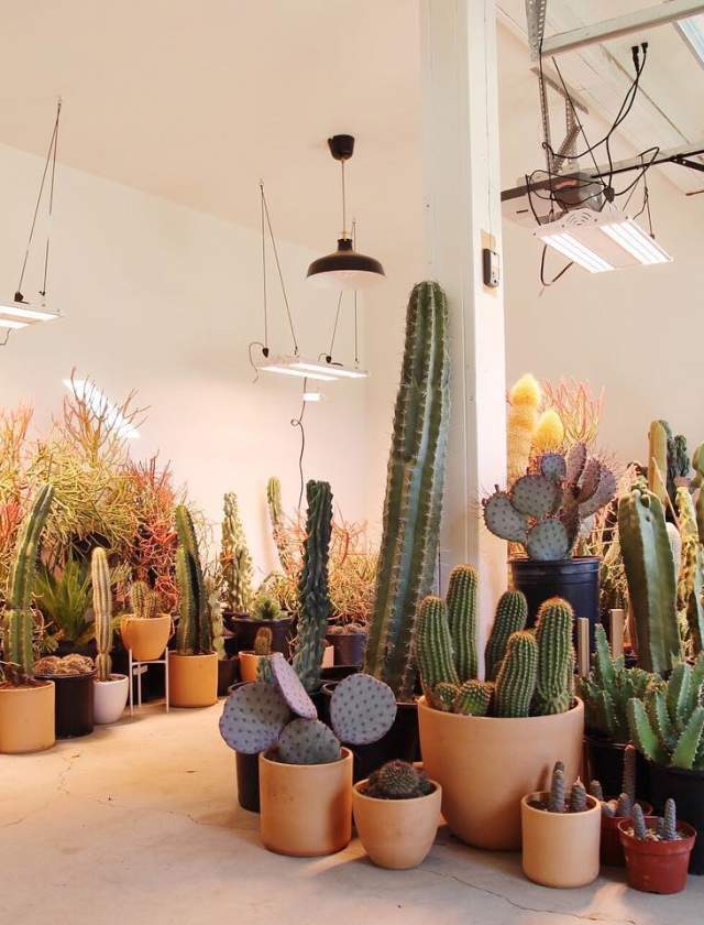 High and Dry Cactus Co.