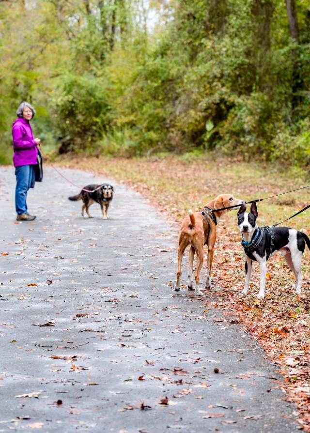 People Walking Dogs Along Trail