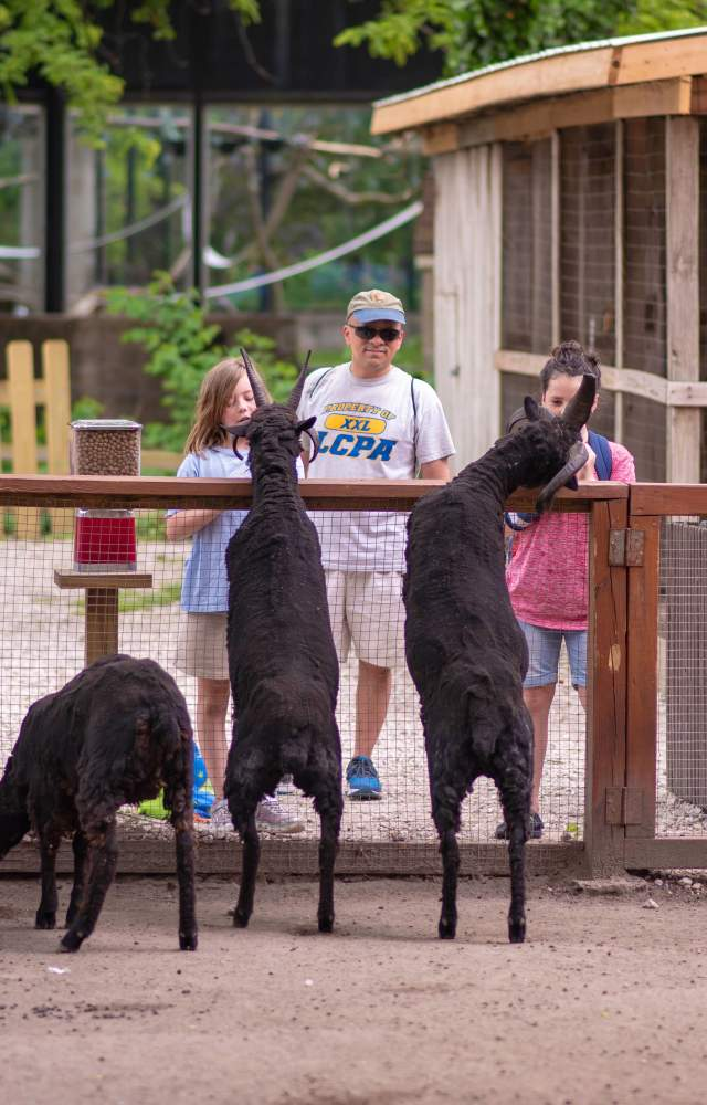 A family visits the goats at the Potawatomi Zoo