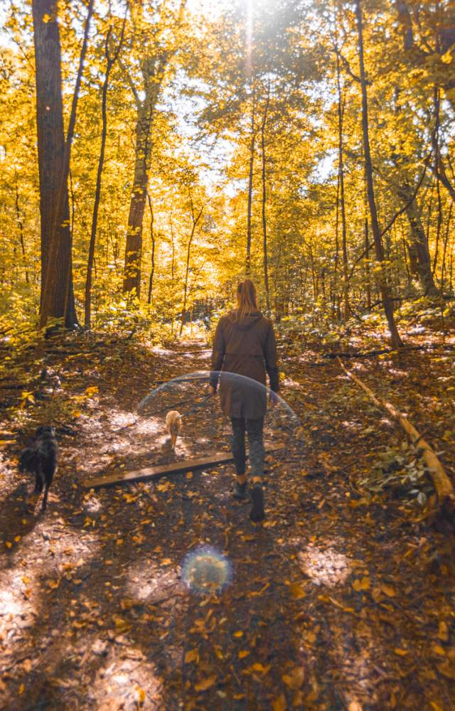 A visitor walks her dogs on a trail at Rum Village Nature Preserve