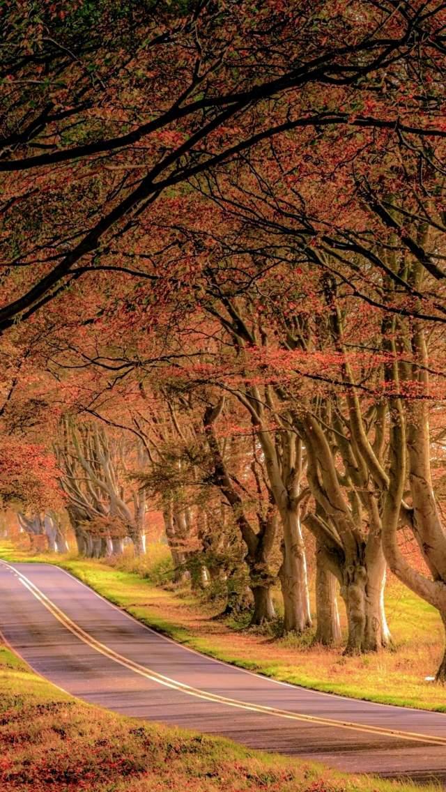 Beech lined avenue near Kingston Lacy