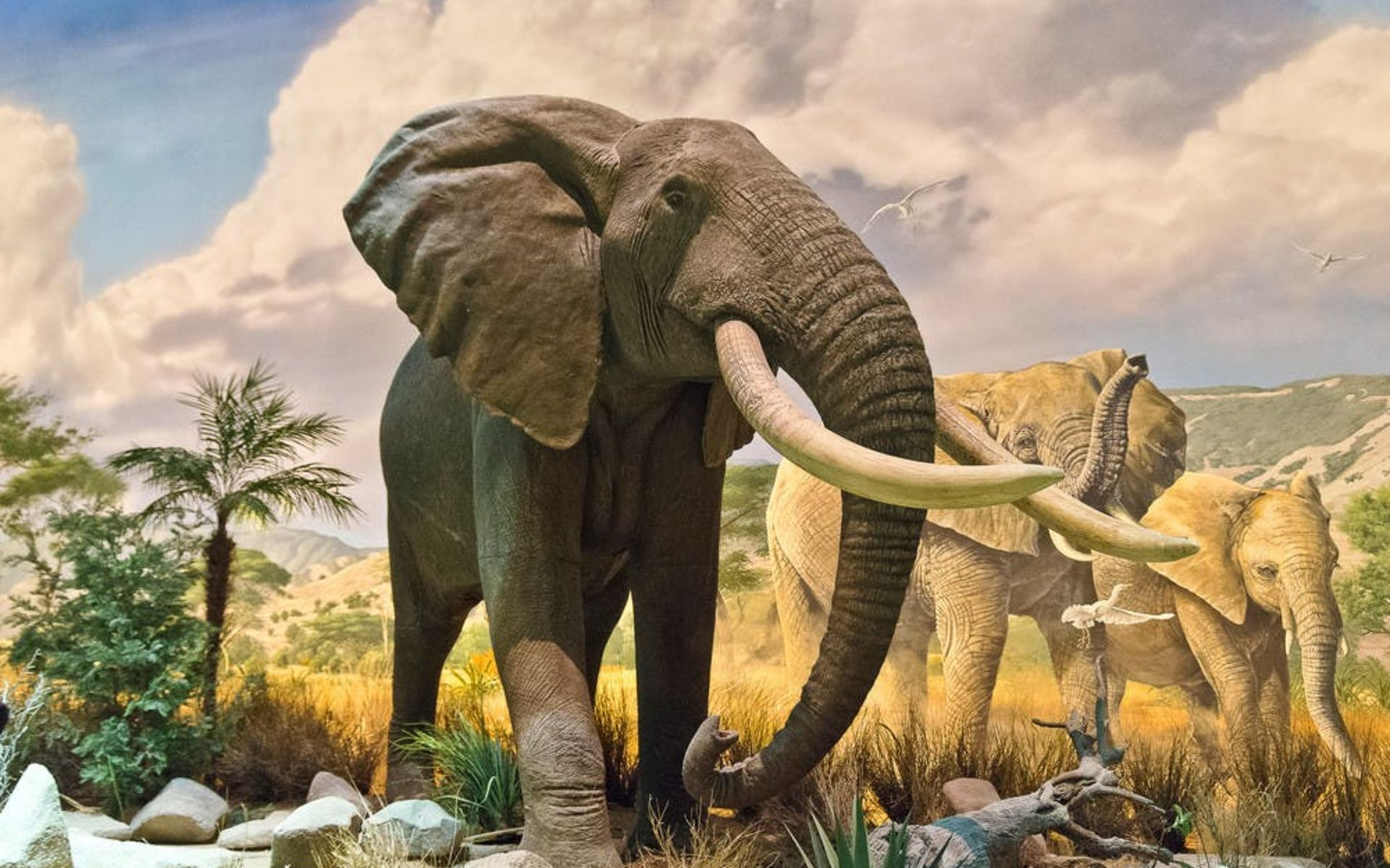 Wonders of Wildlife Wildlife Gallery Elephant