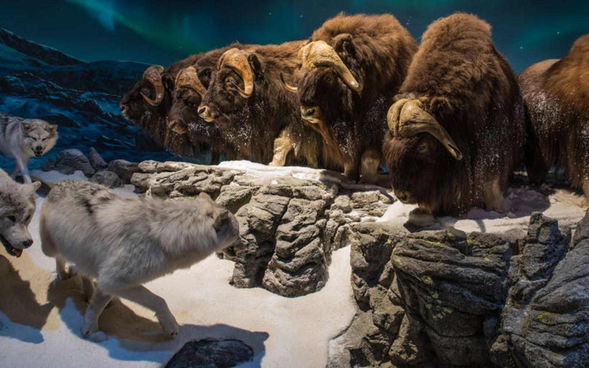 Wonders of Wildlife National Museum & Aquarium in Springfield, Missouri.