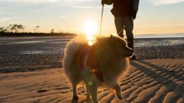 Dog on beach blog header image