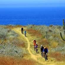 Mountain Bikers