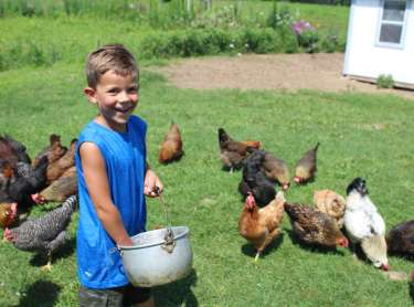 Farm at Prophetstown feeding Chickens Roman