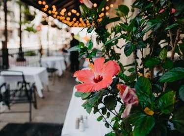 Bistro 501 outdoor dining area