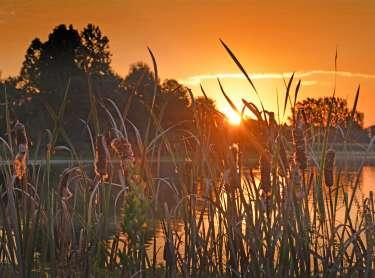 Sunrise at the Celery Bog