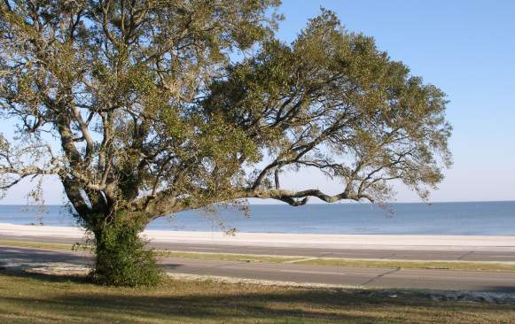 The Mississippi Sound from Pass Christian