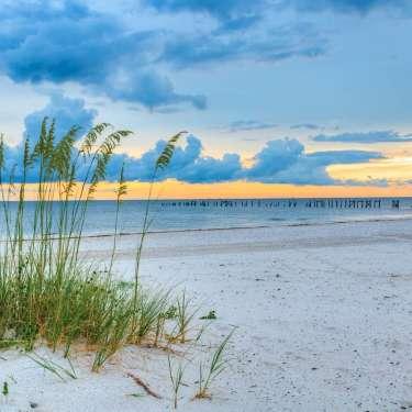 Sea Oats - My Secret Coast Contest