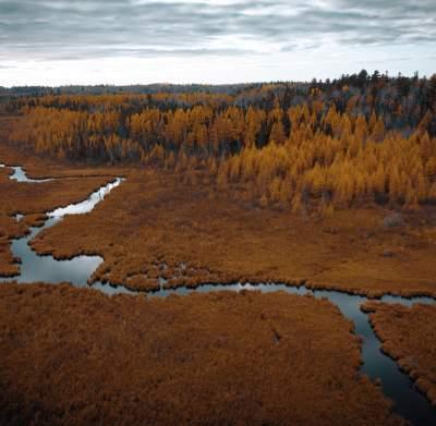 Marsh in the Fall
