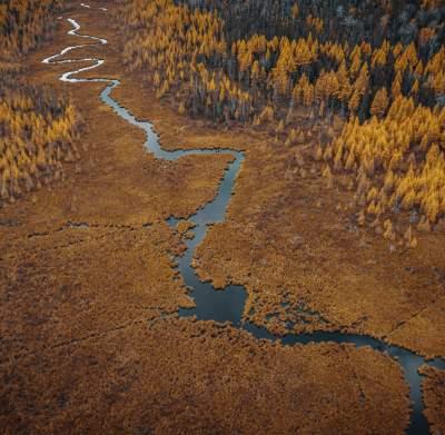 Fall Marsh Aerial