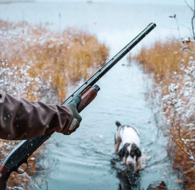 Hunting with a Bird Dog