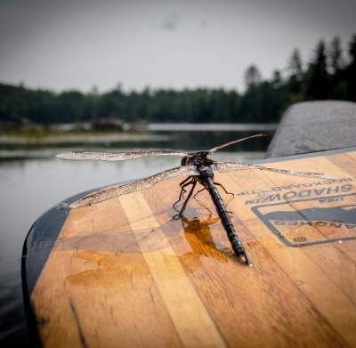 Paddle & Dragonfly