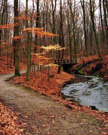 The%20Top%205%20Fall%20Hikes%20in%20Greater%20Columbus