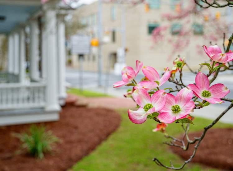 Tree Blossoms Up Close