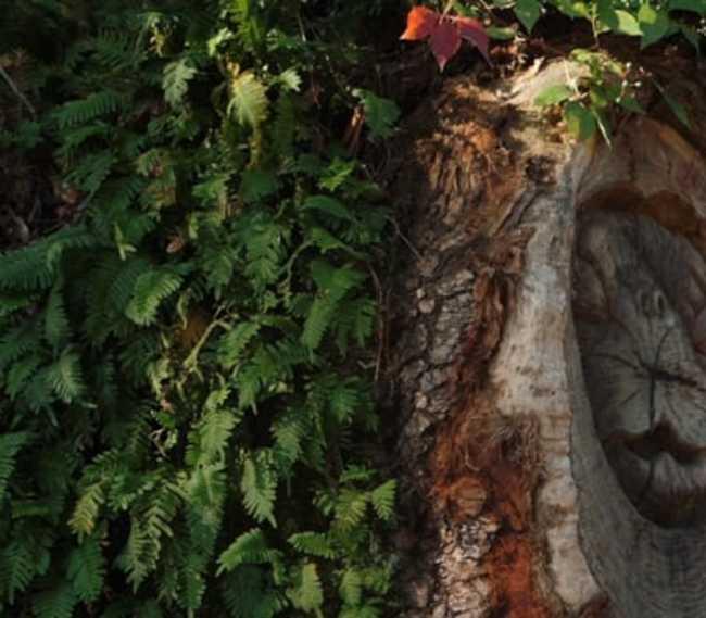 Golden Isles - Tree Spirits
