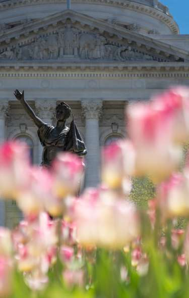 Tulips with statue