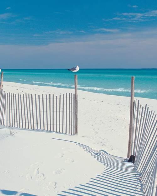 Gulls on Beach Fence