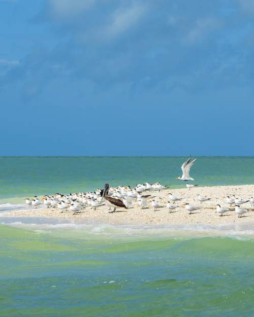 The southwestern corner of Florida is a place of wild beauty -- dolphins, sea birds, and the ruins of dome homes,  a grand notion off Cape Romano long since overtaken by the Gulf of Mexico.