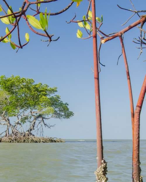 Everglades City red mangrove Florida Bay 10,000 Islands