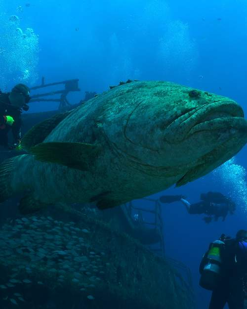 The many natural and artificial reefs on the Treasure Coast, combined with close proximity of the Gulf Stream, provide an amazing variety of marine life for divers to see.