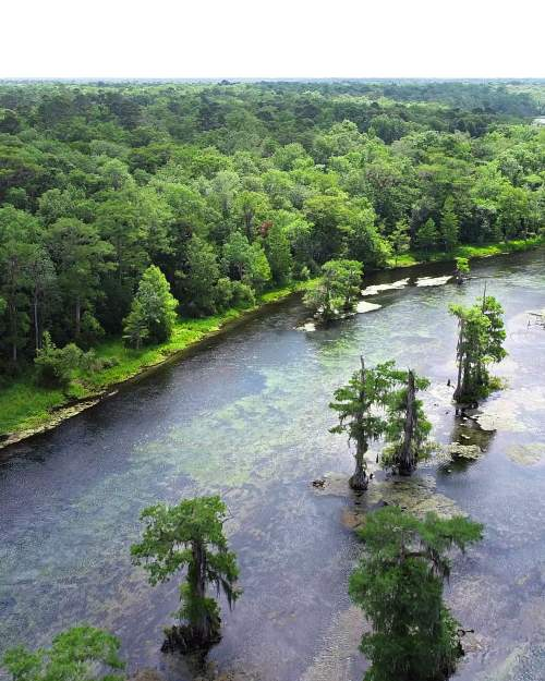 Wakulla Springs near Tallahassee in northwest Florida water temperature 72 degrees year-round boat tour and historic inn