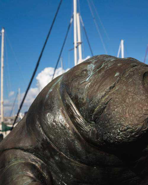 A manatee sculpture greets visitors to the Bradenton River Walk.