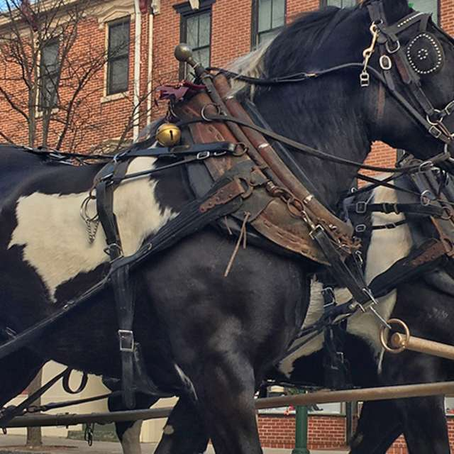 Couple driving horse-drawn carriage in downtown Carlisle