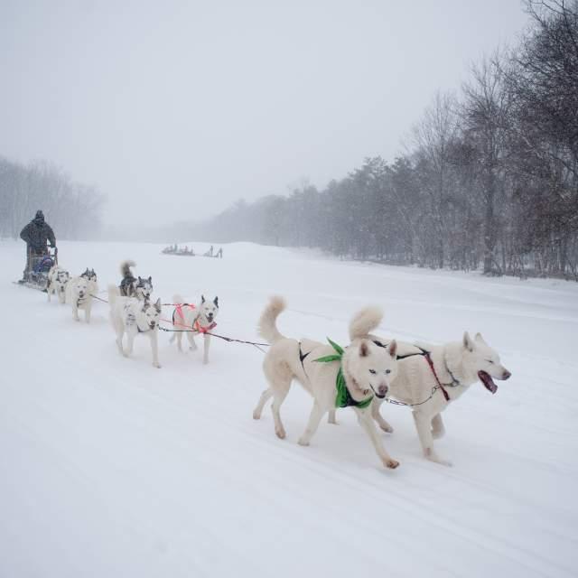 Dog Sledding in the Pocono Mountains
