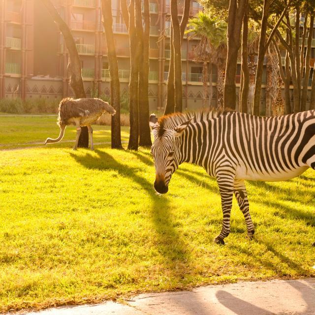 Disney's Animal Kingdom Villas - Jambo House zebra