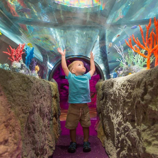 SEA LIFE Orlando Aquarium little boy with hands raised