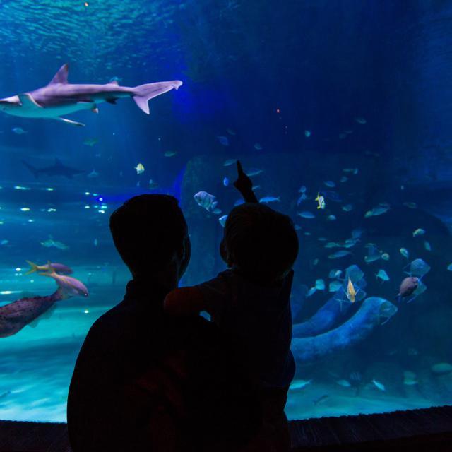 SEA LIFE Orlando Aquarium silhoutte