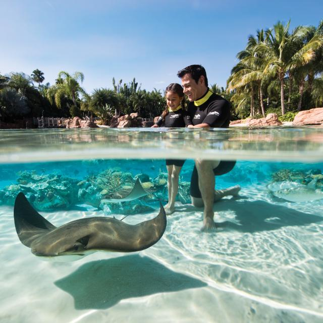 Discovery Cove dad with daughter and stingrays