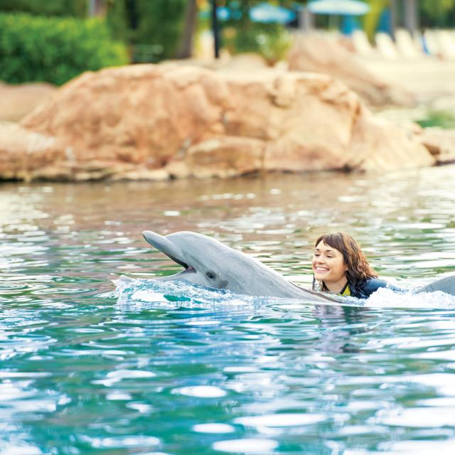 A woman smiles as she swims with a dolphin at Discovery Cove