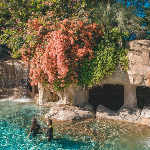 A couple in the water of Serenity Bay at Discovery Cove®