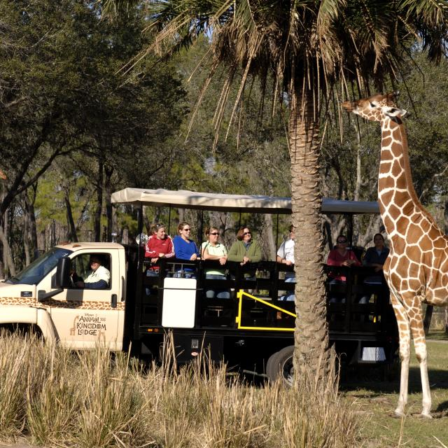 Disney's Animal Kingdom Lodge Wanyama Safari