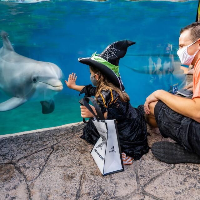 2020 SeaWorld Halloween Spooktacular