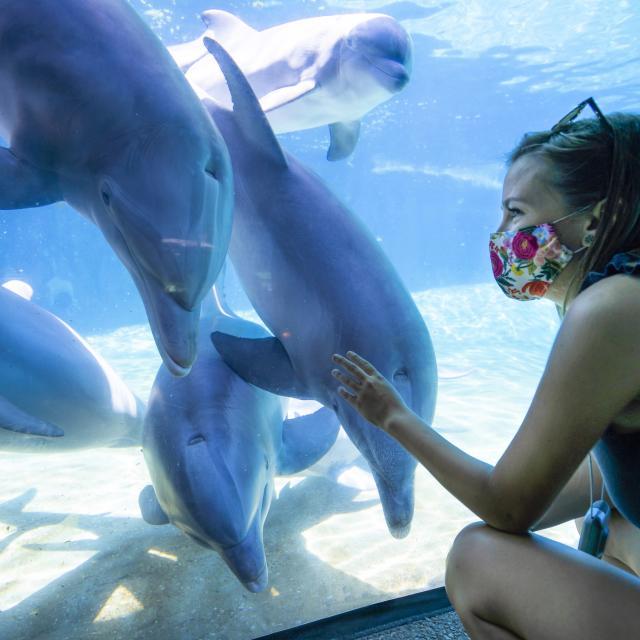 SeaWorld® Orlando dolphin underwater viewing mask