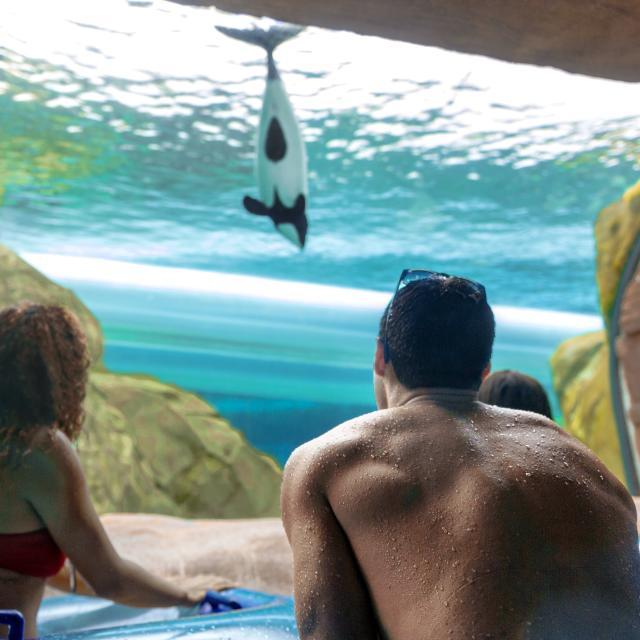 People viewing a whale at Loggerhead Lane in Aquatica Orlando