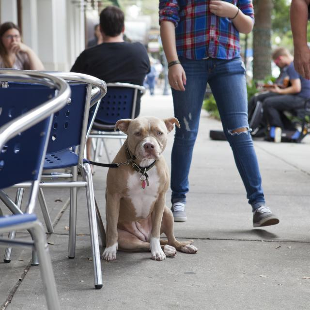 a dog sitting at a restaurant on Park Avenue in Winter Park