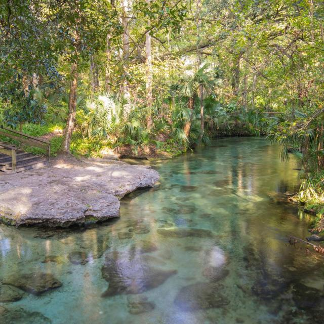 Clear water from a natural spring flows through a lush tropical landscape at Rock Springs.