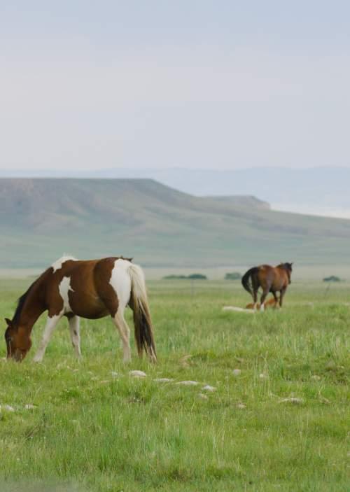 Deerwood Wild Horse Sanctuary Wyoming
