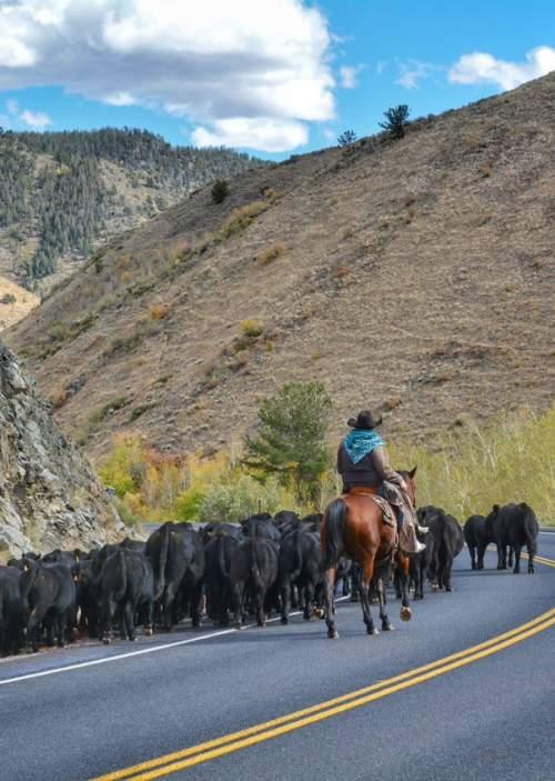 Jelm Woods Landing Laramie Wyoming