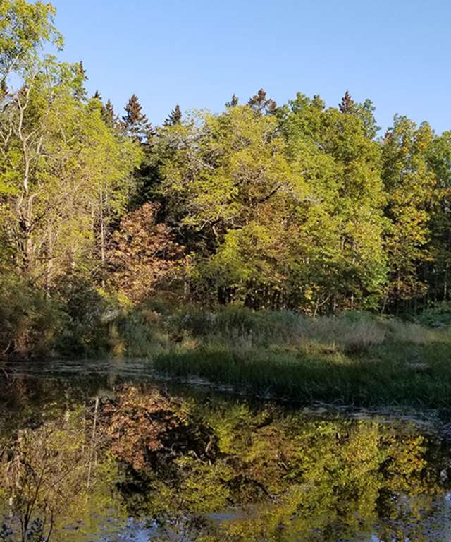 pond in Finger Lakes National Forest