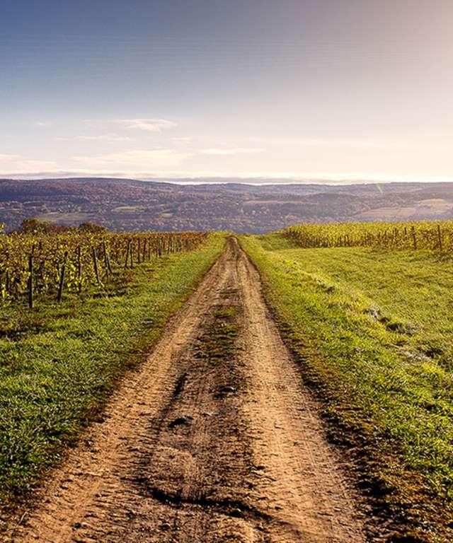 Lakewood Vineyard walk
